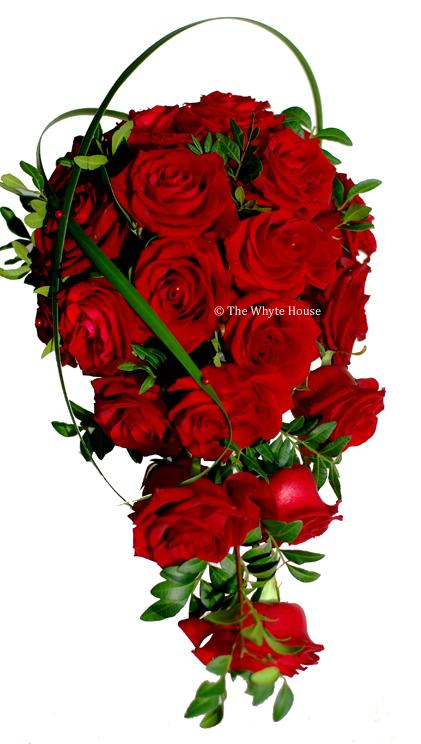 röda rosor sorter